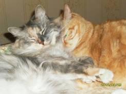 Возьму на передержку кошку или кота.