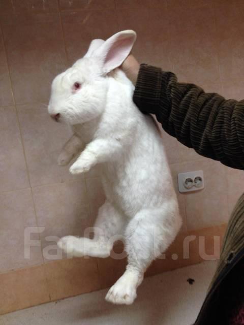 день купить крольчат в петропавловске камчатском областную организацию Коммунистической