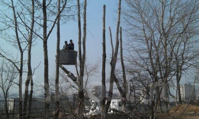 Пилим деревья, аварийные ветки