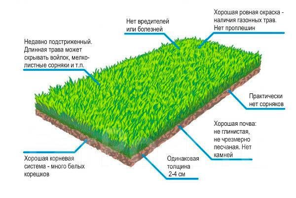 подготовка почвы под рулонный газон проезда автомобиле общественном