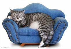 Химчистка мягкой мебели и ковров на дому по приятным ценам!