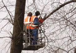 Вырубка деревьев, выкорчевка пней, утилезация древесины