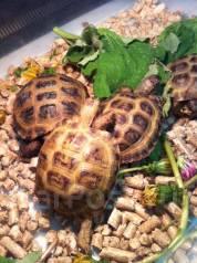 Черепахи. Под заказ