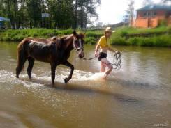 Прокат на лошадях