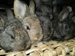Кролики. Под заказ