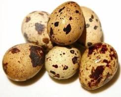 Яйцо перепелиное.