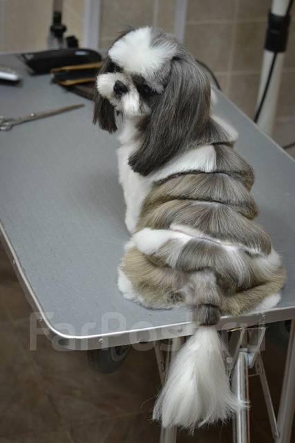 """Парикмахерская для собак и кошек """"Dog-Palacio"""". 71, 64 микрорайон!"""