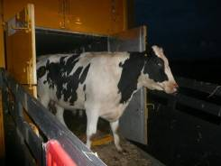 Перевозка животных: КРС, лошадей, овец, коз, свиней и др.