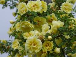 Цветочные, декоративные растения.