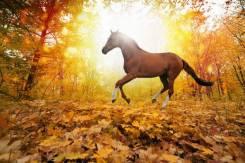 Полугодовой абонемент на конные прогулки по 500 руб. в час.
