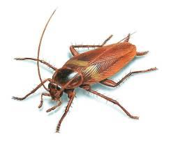 Травим, травля тараканов. травля клопов. Борьба с насекомыми. Гарантия