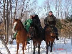 """Конные прогулки """"Зимняя сказка"""". Под заказ"""