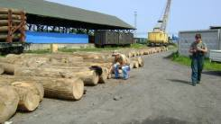Экспертиза лесоматериалов, деревьев, проект освоения лесов | ИП Бохан
