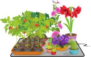 Растения, саженцы, семена.