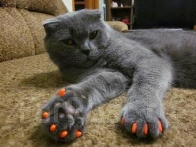 Насадки для ногтей котов