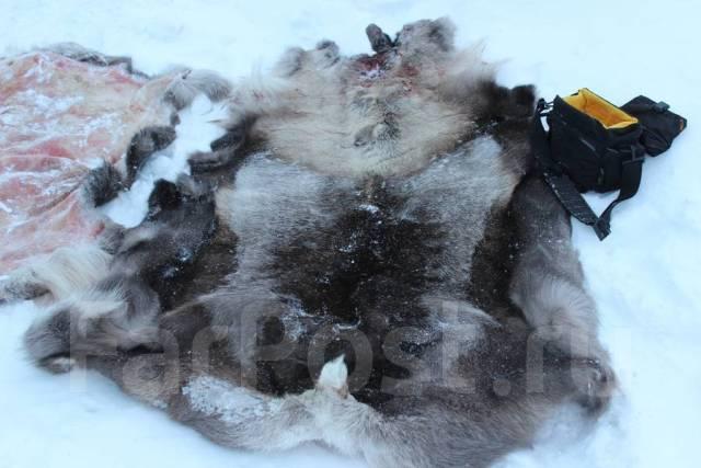 Объявления куплю медвежьи лапы продажа грузовой автотранспорт частные объявления