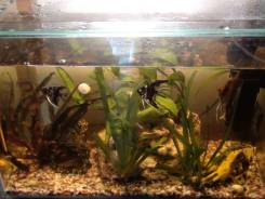 Возьму любой аквариум или террариум