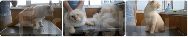 Стрижка кошек и котов. Без наркоза. Подготовка к выставке. Снеговая падь!