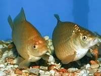 Рыбы. Под заказ