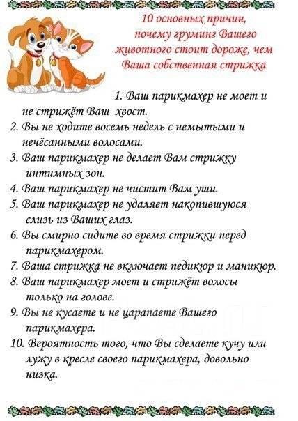 Выезд, Стрижка агрес. кошек. кастрация, Стрижка собак. В-ок, артем