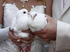 Голуби на свадьбу, юбилеи