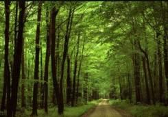 Два Участка 15 и 17 сот с крупными красивыми деревьями 15 сот в Корсаково1. 1 500 кв.м., собственность, электричество, вода, от агентства недвижимост...