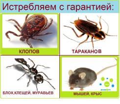 Профессиональное уничтожение тараканов, клопов, блох. Туманом.