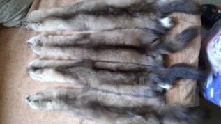 Продам шкуры соболя, рыси, лисы, выдры