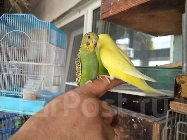 Порно маленькие попугаи