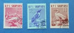 1961 Албания. Птицы. 3 марки. Гашеные