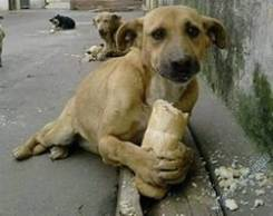 СОС Нуждаемся в любой помощи бездомным животным