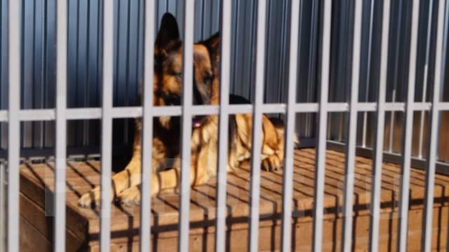 Гостиница передержка собак средних и крупных пород
