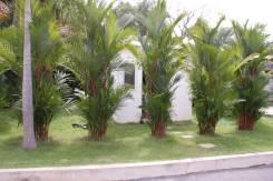 """Две виллы в комплексе из 6 домов """"Garden Village"""" Пхукет"""