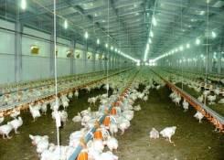 Строительство птицефабрик