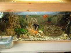 Возьму большой аквариум до 200-500 литров или поменяю на свои лоты