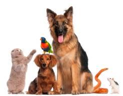 Ритуальные услуги для животных.