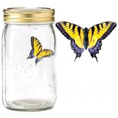"""Необычный подарок """"Бабочка в банке"""""""