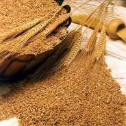 Зерно Ячмень - корма для сх животных 15 рублей/кг во Владивостоке.