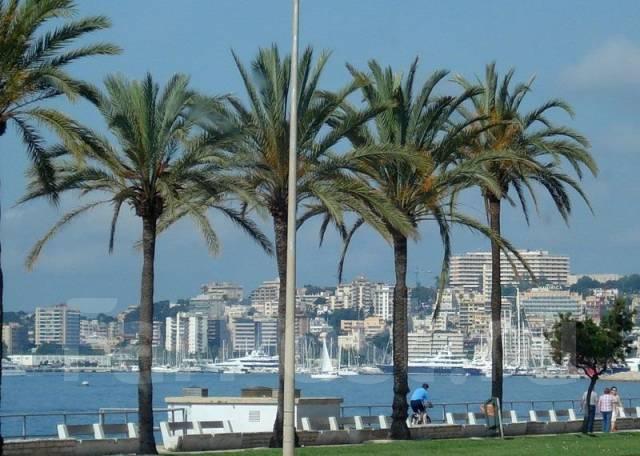 Испания. Пальма-де-Майорка. Пляжный отдых. Испания. Пальма-де-Майорка !