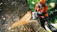 Спилим ваши деревья бесплатно!