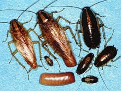 Уничтожение Всех видов насекомых, Действие!100%