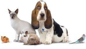 Ветеринарный врач. Вызов, кастрация, стерилизация, вакцинация. Эвтаназия.