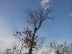 Пилка деревьев. Пилим сложные деревья