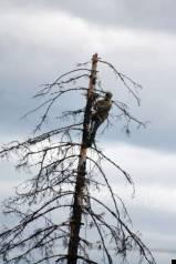 Спил деревьев, подрезка дерева