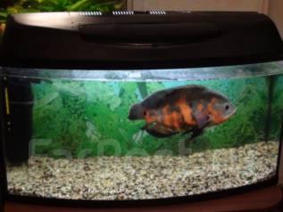 Возьму бесплатно большой аквариум для больших рыб или поменяю на свои