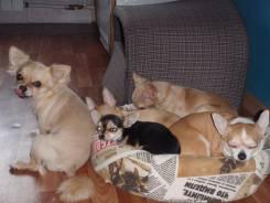 Гостиница для собак мелких пород