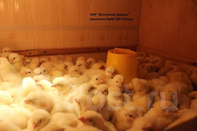 Куры, утки, цесарка, индейка - Инк. яйцо из России и Европы, цыплята. Под заказ