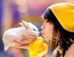 Аренда кролика