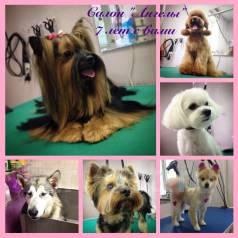 фарпост владивосток животные собаки санітарія