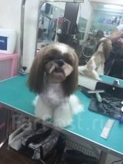 Весь спектр парикмахерских услуг для собак.